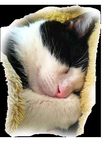 sleeping-final